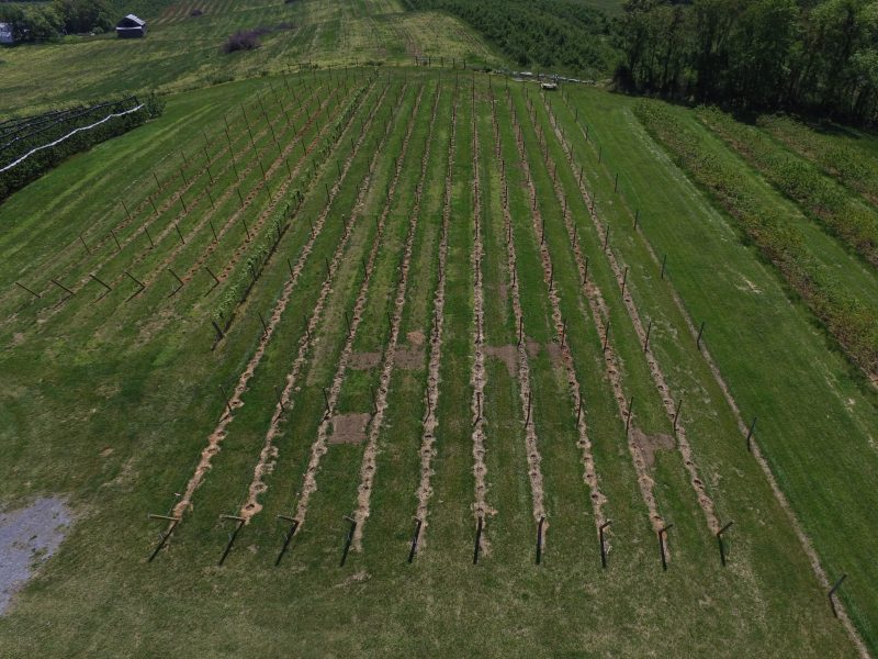 Overview drone photo of the new vineyard