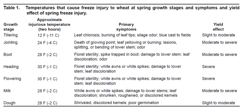 2021 Cold damage to small grain and corn - Dr. Wade Thomason
