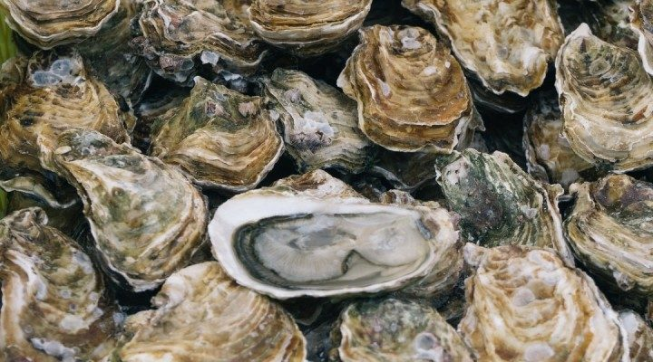 Image of Oysters by Ben Stern